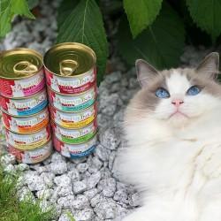 Enisyl-F 100ml - pasta uspokajająca dla kota